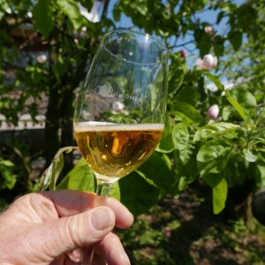 Apple Wine Glass